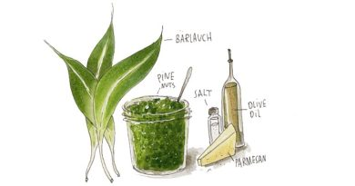 Foraging and Wild Garlic Pesto