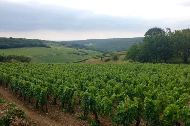 A Long Weekend in Burgundy